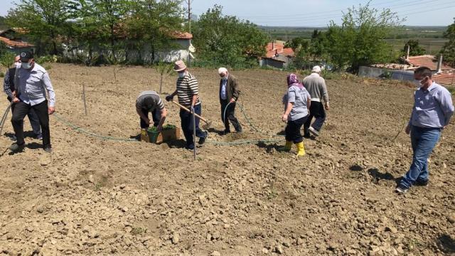 Edirnede huzurevi sakinlerinin hareketliliklerini artırmak amacıyla tarımsal faaliyetler düzenleniyor