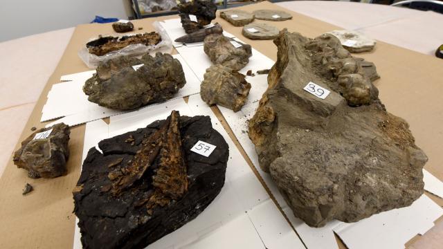 Araba bagajında 15 milyon yıllık fosiller bulundu