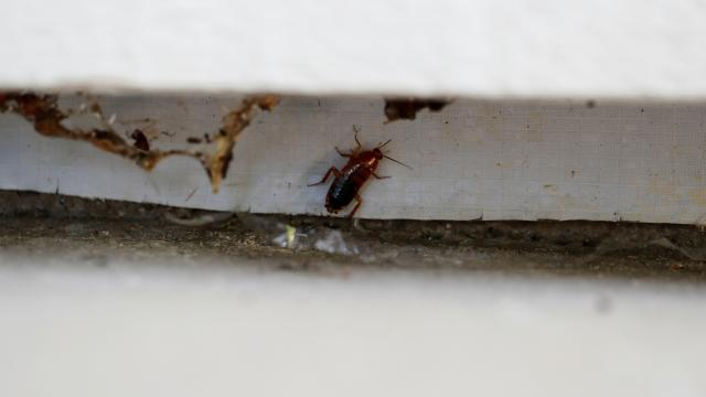 Çete hesaplaşması: Restorana binden fazla hamam böceği attılar