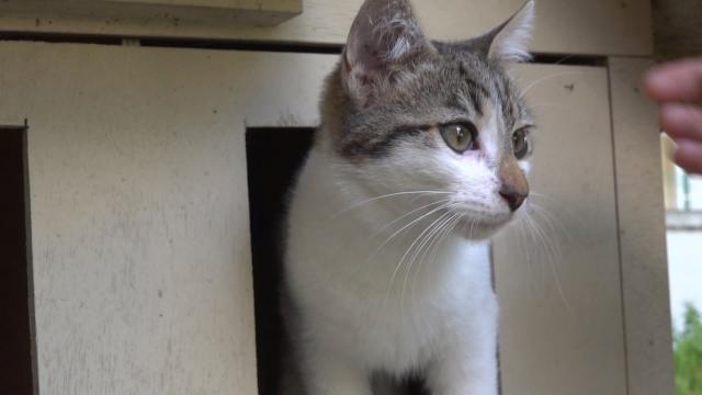10 yıldır kayıp olan kedi, sahiplerine kavuştu