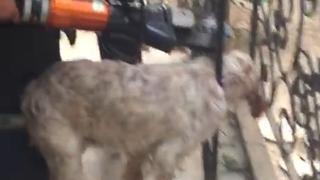 Başı demir korkuluklara sıkışan köpeği itfaiye kurtardı