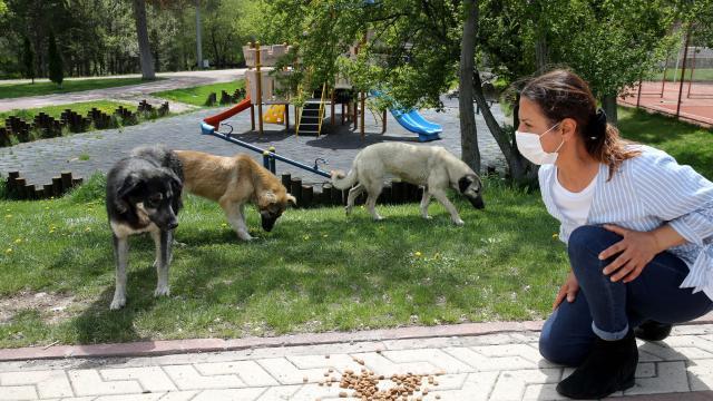 Sivasta tam kapanmada sokak hayvanları unutulmadı