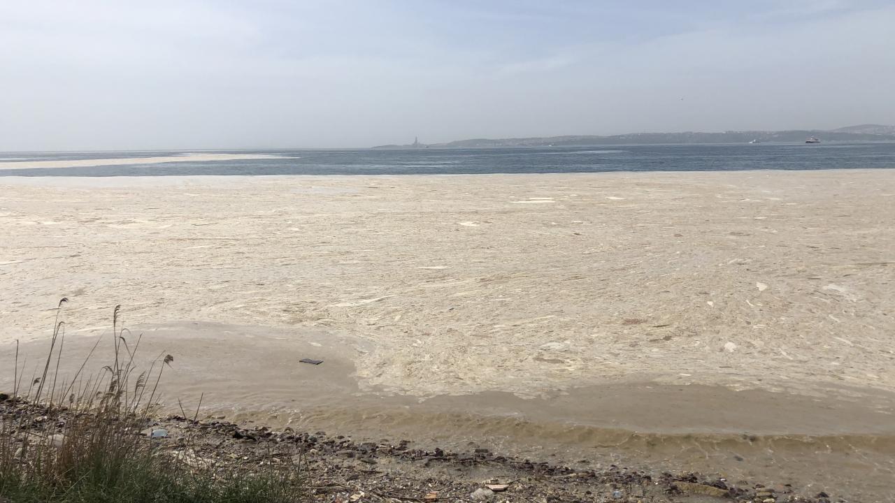 Deniz salyası Bandırma sahilini kapladı