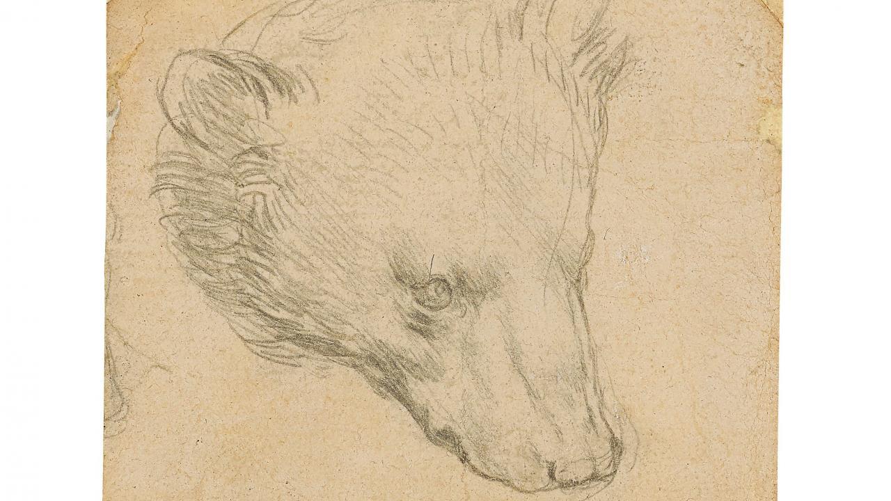Da Vinci'nin Ayı Kafası çizimine rekor fiyat tahmini