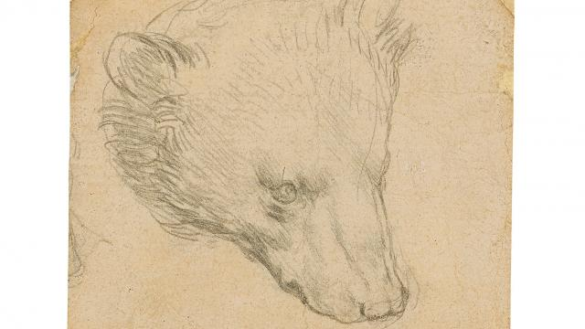"""Da Vincinin """"Ayı Kafası"""" çizimine rekor fiyat tahmini"""
