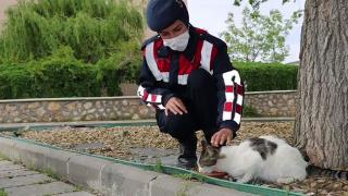 Jandarma sokak hayvanlarını yalnız bırakmadı