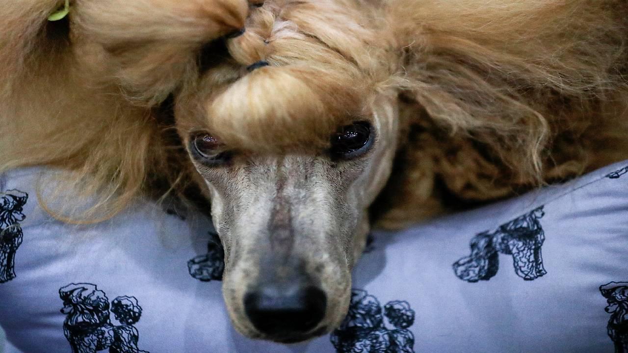 Dolandırıcının öldüm yalanını köpeği ele verdi