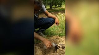 Kaplumbağa ile suyunu paylaşan çiftçi takdir topladı