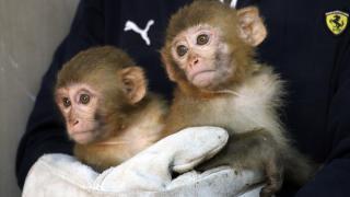 Gümrükte ele geçirilen 12 maymun Gaziantep Hayvanat Bahçesi'nde