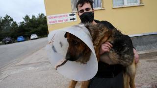 Sivas'ta ameliyat sonrası rahatsızlanan köpeği Vefa Sosyal Destek Grubu hastaneye götürdü