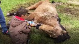 Merada ayağı kırılan atı çocuklar ot yolarak besledi