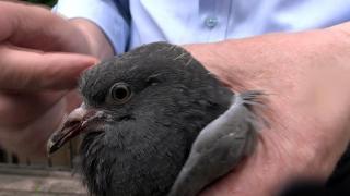 Cam balkona sıkışan güvercini itfaiye ekipleri kurtardı