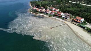 Deniz salyası neleri etkiliyor?