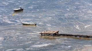 Deniz salyası balık popülasyonunu tehdit ediyor