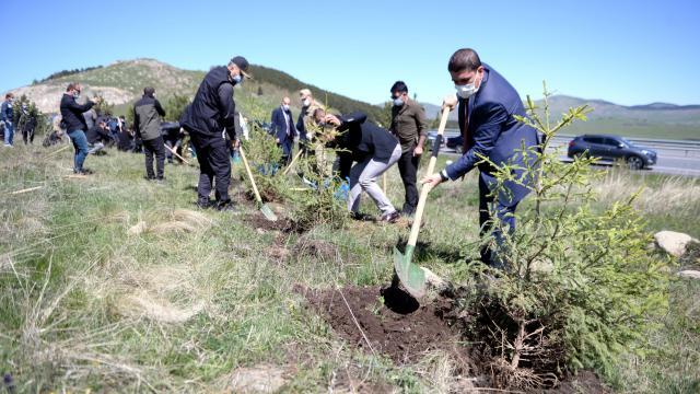 Ardahanın orman varlığının artırılması için 100 bin fidan toprakla buluşturuldu