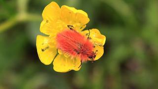 2 bin 340 rakımlı zirvede böcek türü keşfedildi