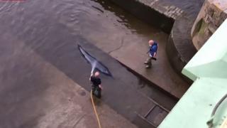 Londra'da 4 saatlik balina kurtarma operasyonu