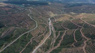 İzmir'de 2 yıl önce yanan ormanlık alana 6,5 milyon fidan dikildi