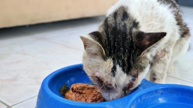 Osmaniyede yaralı halde bulunan kedi tedavi altına alındı