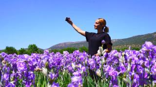 Isparta'da yağı kıymetli zambak bahçeleri mor renge büründü