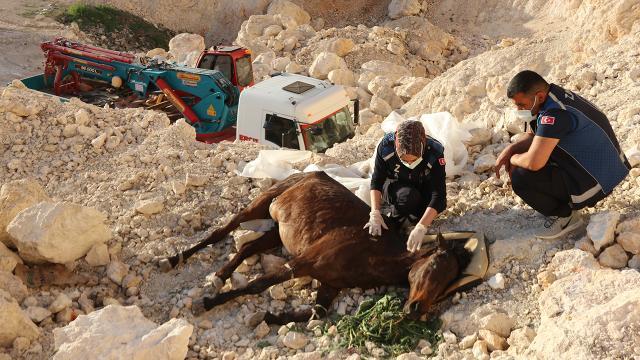 Vanda uçurumdan düşen atı belediye ekipleri kurtardı