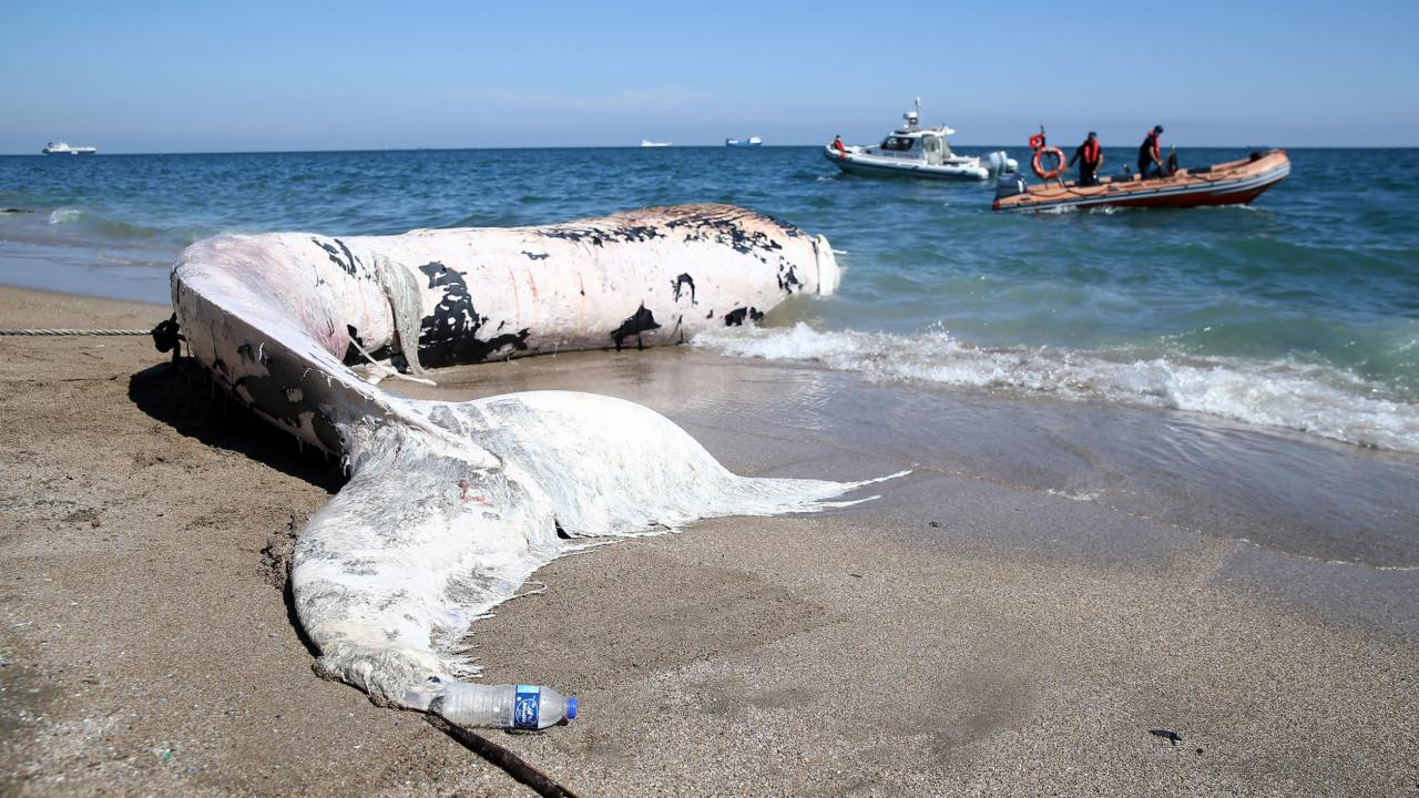 Mersin'de 14 metrelik balina kıyıya vurdu