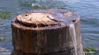 Kanalizasyon suyu denize aktı