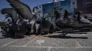 Sokak hayvanlarını her gün besliyorlar