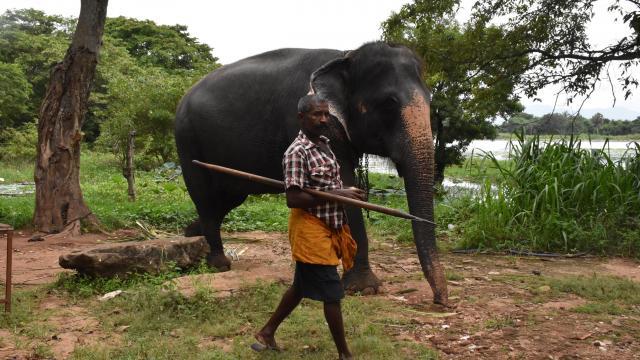 Hindistanda yıldırım düşmesinin ardından 18 fil ölü bulundu