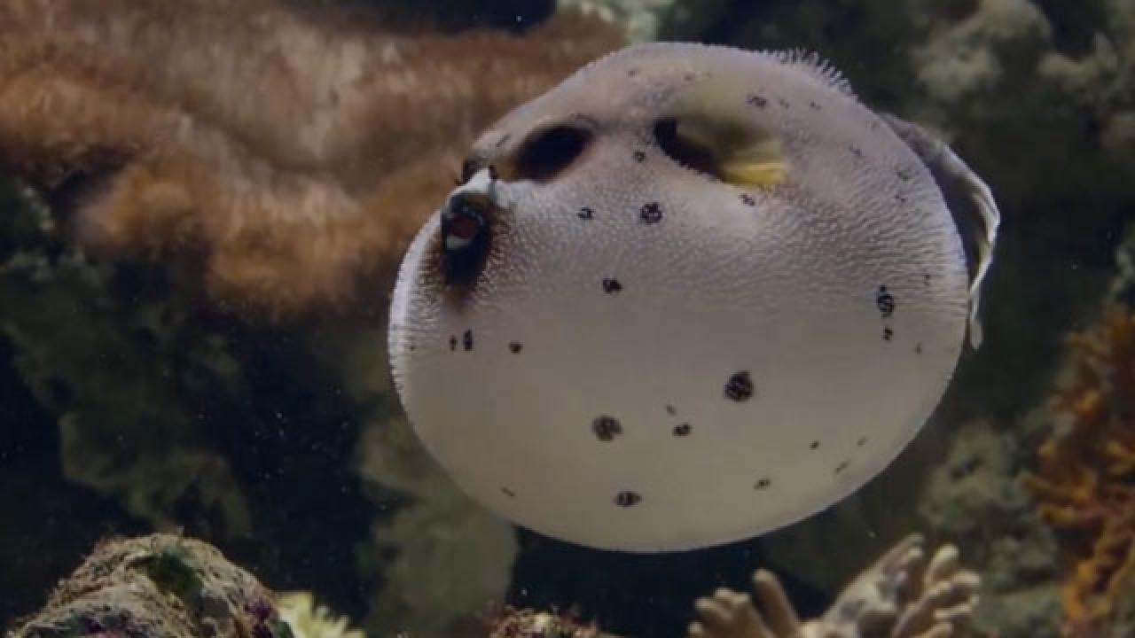 Denizdeki tehdit: İstilacı türler