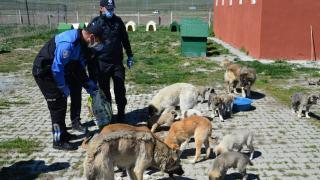Ardahan'da polis ekipleri sokak hayvanlarının da aç kalmaması için yoğun mesaide