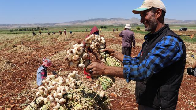Gaziantepte tarım işçileri bayramda tarlanın yolunu tuttu