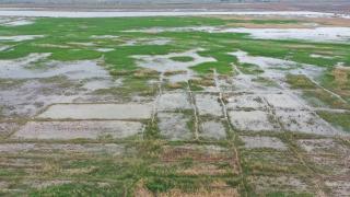 Çankırı'da tarım arazileri zarar gördü