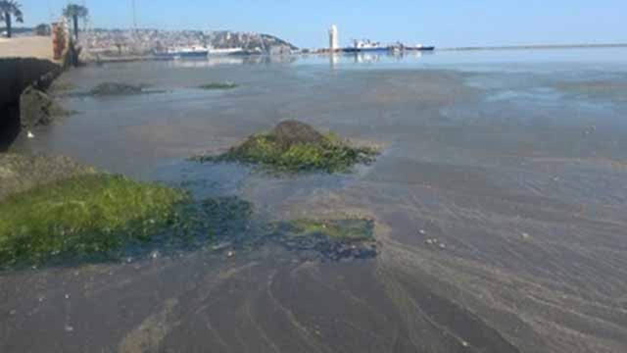 Karadeniz'de de deniz salyası paniği