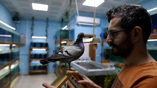Yıllardır gözü gibi baktığı güvercini ölünce dondurma kararı aldı