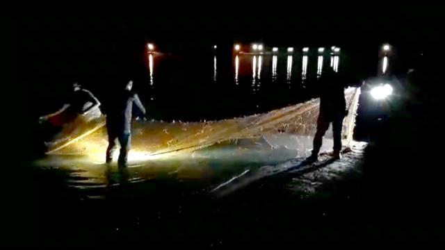 Vanda kaçak avlanan 15 ton inci kefali suya bırakıldı