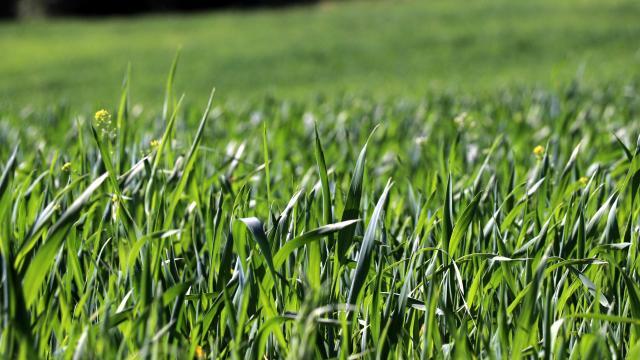 Karabükte kullanılmayan tarım arazileri üretime kazandırılıyor