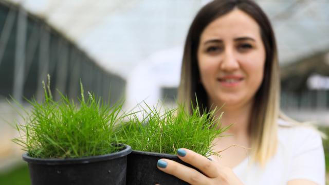 Antalyada kuraklığa dayanıklı çim üretildi