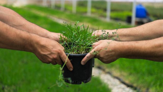 Çimlerle oyun bağışıklık sistemini iyileştiriyor