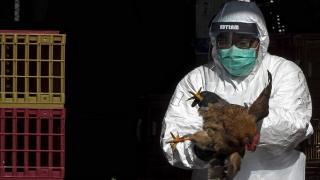 Çin'de ilk kez insanda H10N3 türü kuş gribine rastlandı