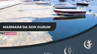 Çevre Bakanlığı deniz salyası için harekete geçti