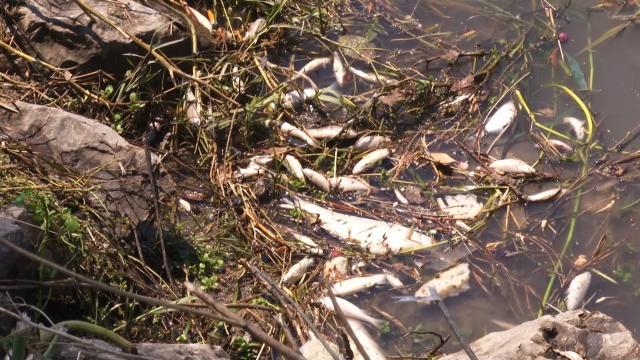 İzmirdeki balık ölümlerine inceleme