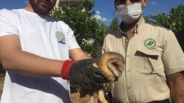Aydında yaralı halde bulunan baykuş tedaviye alındı