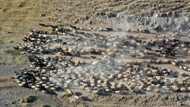 Bitliste küçükbaş hayvan sürülerinin Nemrut Dağına yolculuğu başladı