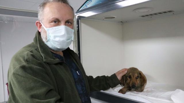 Zonguldakta ormanda bacakları kırılmış halde bulunan köpeğin tedavisi sürüyor