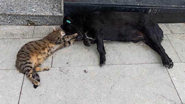 Birlikte uyuyan kedi ve köpeğin dostluğu görenleri şaşırtıyor