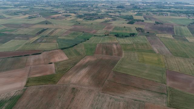 Kırklarelinde ilkbahar yağışlarının buğday ve ayçiçeği verimini artırması bekleniyor