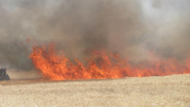 Gaziantepte 120 dönüm buğday ekili alan yandı