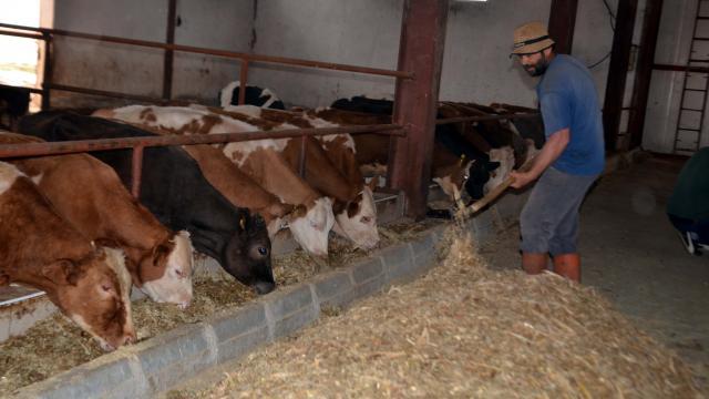 Muşlu girişimci devlet desteğiyle kurduğu çiftlikte günde 350 litre süt üretiyor