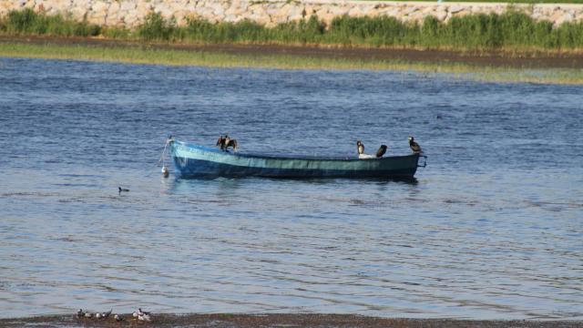Beyşehir Gölü kıyıları, yaz mevsiminin ilk günlerinde adeta kuş cennetine döndü